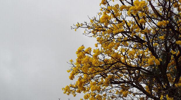 A previsão do Instituto Nacional de Meteorologia (Inmet) é de céu nublado a encoberto com pancadas de chuvas e trovoadas isoladas.