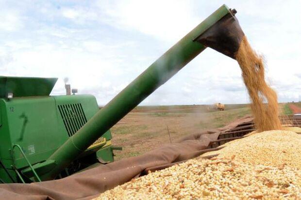 Os produtores brasileiros devem colher 63,8 milhões de hectares na safra agrícola de 2020, uma elevação de 1,1% em relação à área a ser colhida em 2019