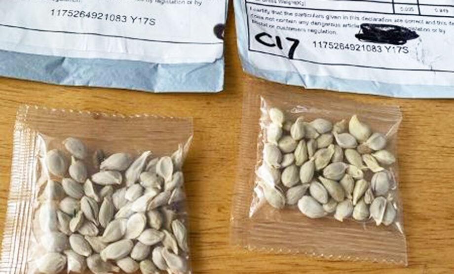 As sementes de espécies não identificadas geralmente chegam junto com alguma encomenda feita pela internet, como se fosse um brinde