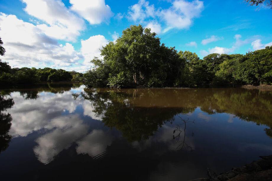 Ministério do Meio Ambiente pode derrubar resoluções que delimitam áreas de proteção permanente (APPs) de manguezais e de restingas