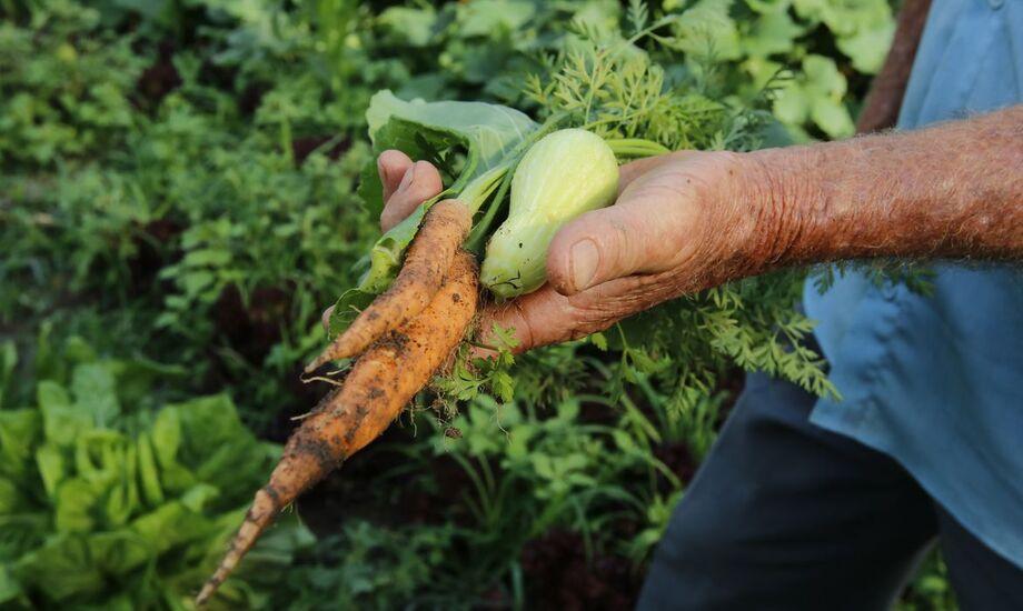 O governo federal destinará R$ 72,9 milhões aos estados e Distrito Federal para o Programa de Aquisição de Alimentos (PAA)