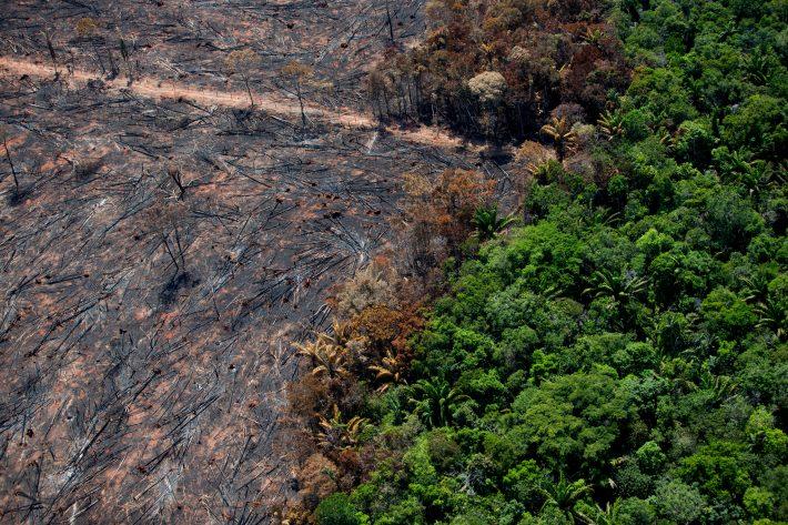 Desmatamento de floresta amazônica no Mato Grosso  imagem ilustrativa