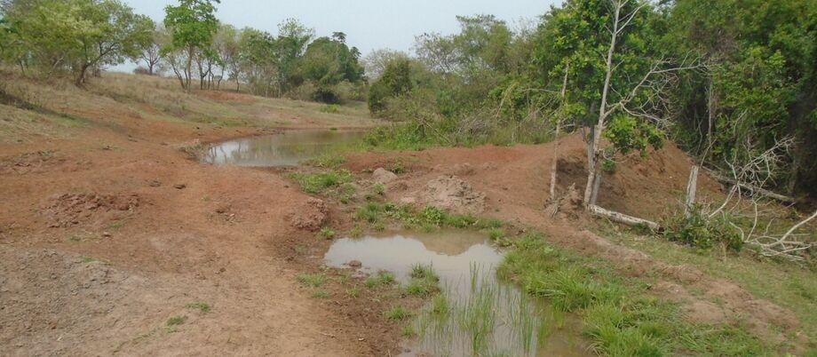 Dono de fazenda é autuado em R$ 5 mil por colocar gado em matas ciliares de córrego.