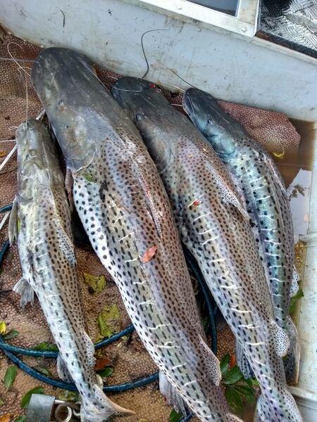 Um outro pescador já foi identificado e também será autuado com multa no mesmo valor