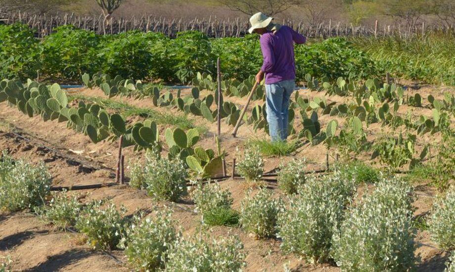 O Conselho Monetário Nacional (CMN) flexibilizou regras para concessão de crédito rural para pequenos produtores