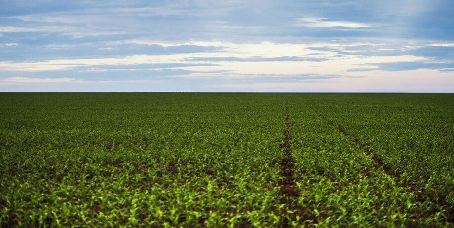 A região sul está com o plantio mais avançado, com média de 97,4%, enquanto a região centro está com 97,1% e a região norte com 93,3% de média