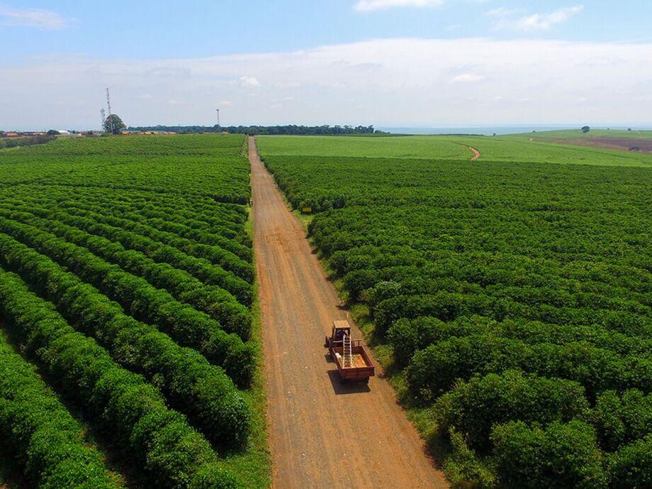 Desempenho do agronegócio puxa criação de empregos