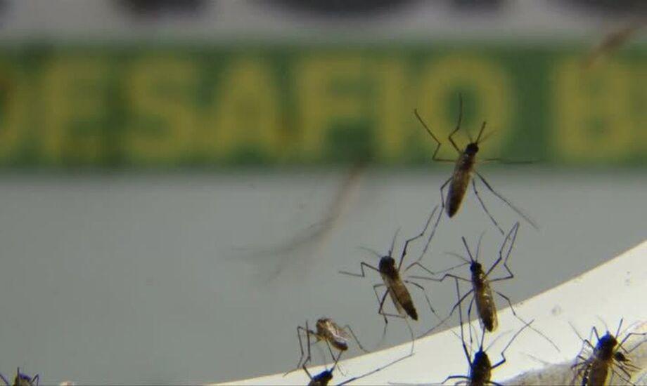 Em uma semana, Mato Grosso do Sul registrou 502 novos casos de dengue, segundo as informações do boletim divulgado hoje (25)  da Secretaria de Estado de Saúde (SES)