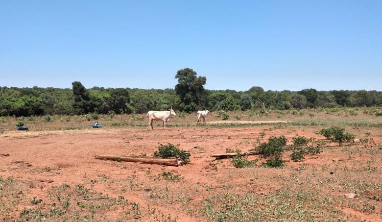 Na manhã de ontem (28), a Polícia Militar recebeu uma denúncia de maus tratos a animais em uma fazenda na área rural de Três Lagoas