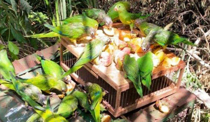 Mais de 100 animais  a maioria aves  retornaram ao seu habitat na quinta-feira