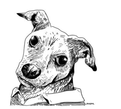 No ápice da quarentena, o tradicional passeio dos cachorros também foi deixado de lado por muitos donos
