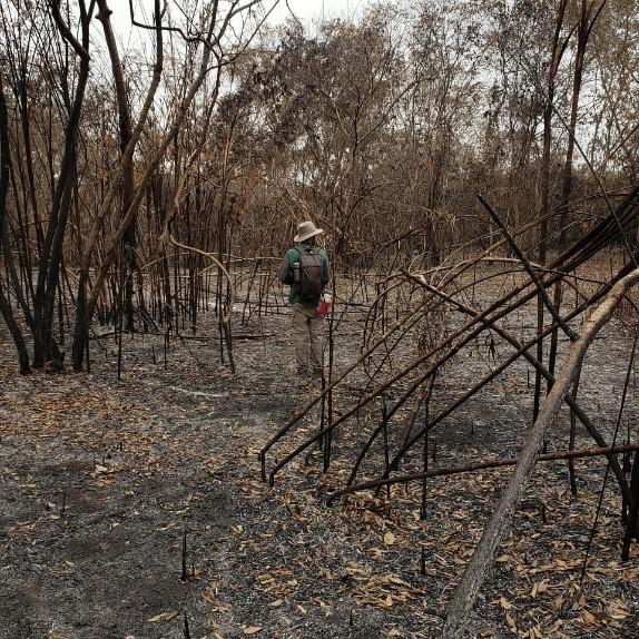 Profissionais do IHP estão nos locais afetados pelos incêndios para realizar os trabalhos