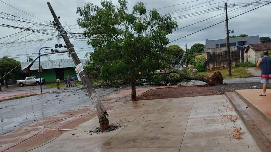 A árvore caiu na avenida