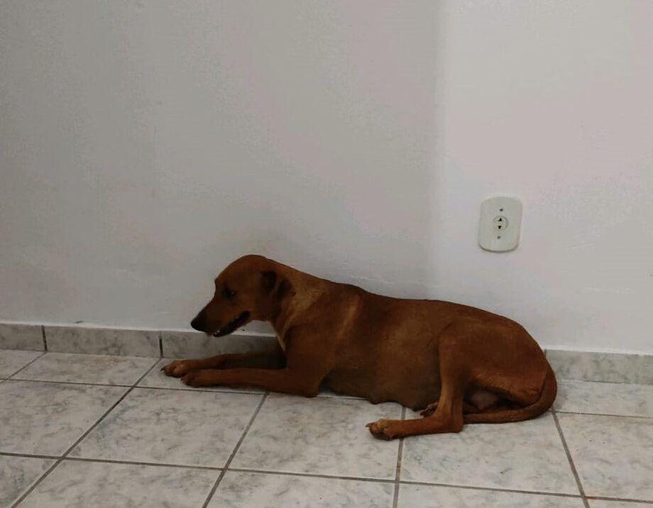 Cadela que foi abandonada