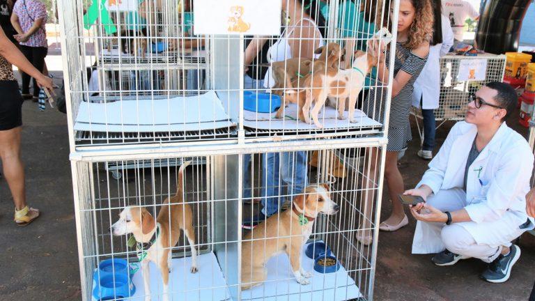 O evento terá cerca de 35 animais, entre cães e gatos, filhotes e adultos, aguardando por um lar