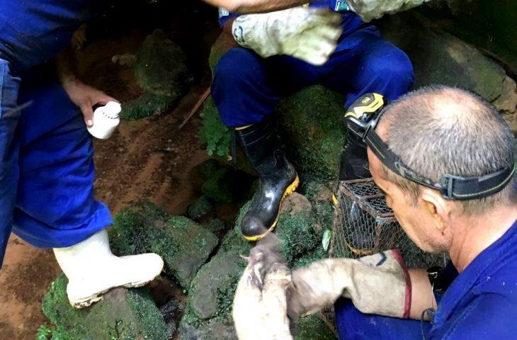 A agência faz um alerta aos produtores para a importância de comunicar possíveis abrigos de morcegos nas propriedades