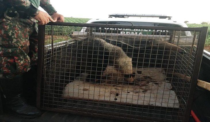 PMA autua 92 por crimes contra a fauna, resgata 774 animais de criminosos