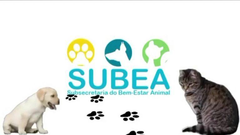 Prefeitura lança programa inédito de educação para o Bem-Estar Animal nas redes sociais