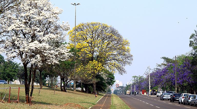 Campo Grande - Caminho dos Ipês