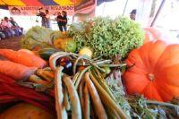 Frutas, verduras e legumes produzidos de forma natural por agricultores familiares, sem emprego de a
