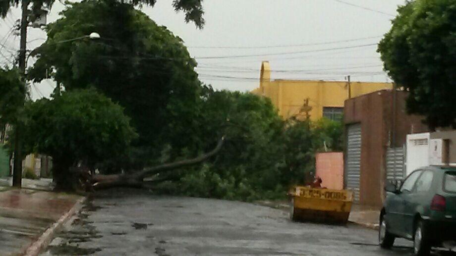 Rua Brigadeiro Machado, Vila Jacy.