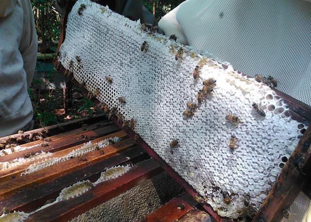 O mel produzido no Pantanal passou a integrar o time dos produtos nacionais com certificação de Identificação Geográfica (IG)