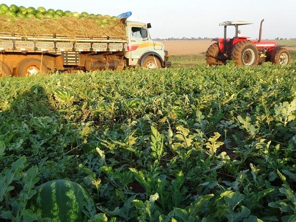 Atualmente, 50% da melancia consumida no MS é fruto da comercialização interna, o que valoriza a produção regional, evitando a importação do alimento de estados como São Paulo, Tocantins, Goiás e Minas Gerais.