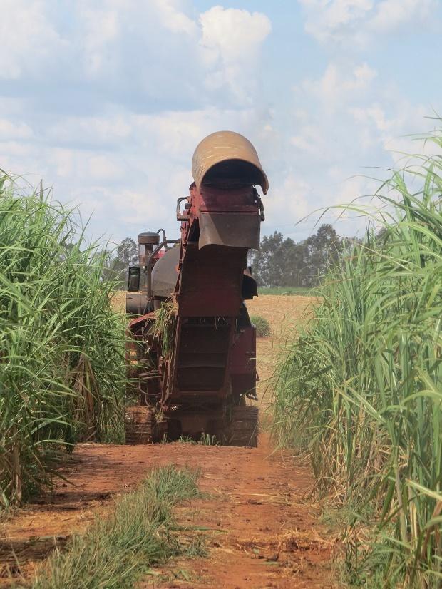 O volume acumulado de cana-de-açúcar processada até o momento é de 41,47 milhões de toneladas, 7% maior em relação ao mesmo momento na safra anterior.