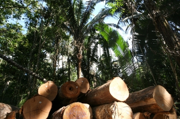 Setor florestal será debatido no Crea-MS