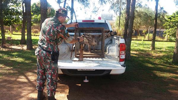 PMA recolhe animal e arma de assentado
