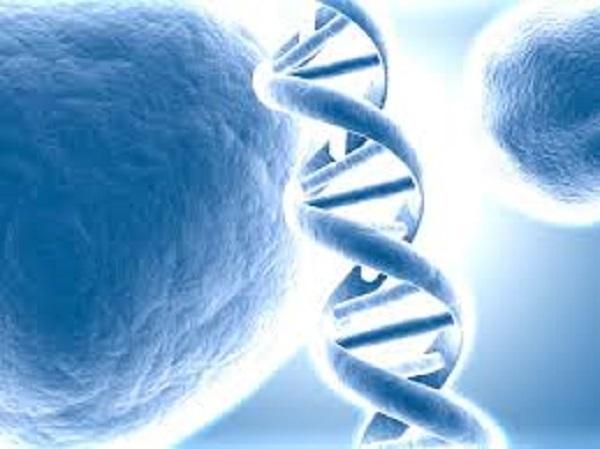 Com foco no melhoramento genético aplicado, o curso é teórico e prático