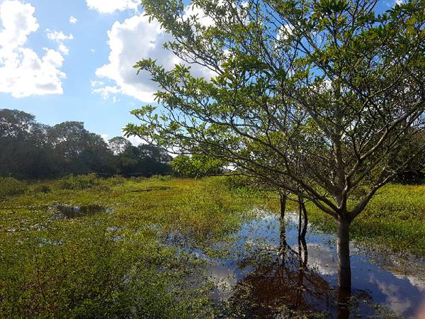 As enchentes de 4 a 5 metros estão longe dos níveis mais altos atingidos pelo rio Paraguai na região