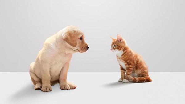 O tratamento, apesar de recomendado para cães e gatos, também pode ser aplicado em qualquer outro pet