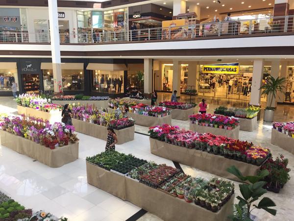 Cerca de três mil flores e plantas estão disponíveis para os filhos que buscam algo mais tradicional