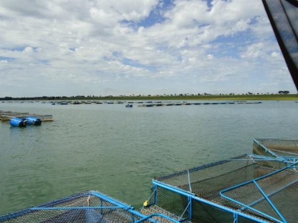 Tanques rede em atividade no reservatório da usina hidrelétrrica de Ilha Solteira