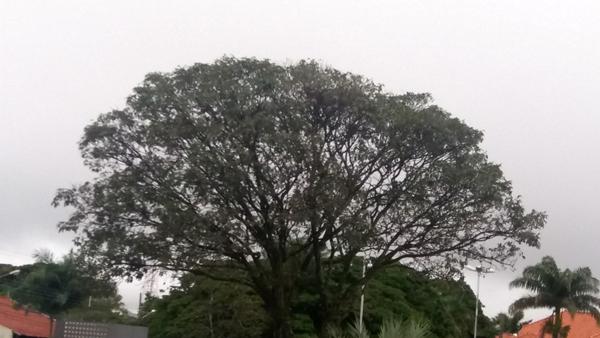 A exemplo deste domingo, segunda deve ser de tempo encoberto e baixa temperatura em Campo Grande