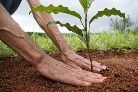 Energisa faz plantio de árvores