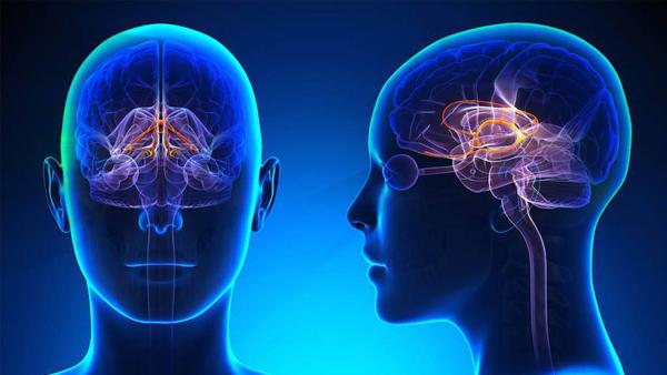 As pessoas que enfrentam a Síndrome de Aicardi-Goutieres nascem com danos no cérebro que comprometem seus movimentos, sua fala e outros aspectos do organismo