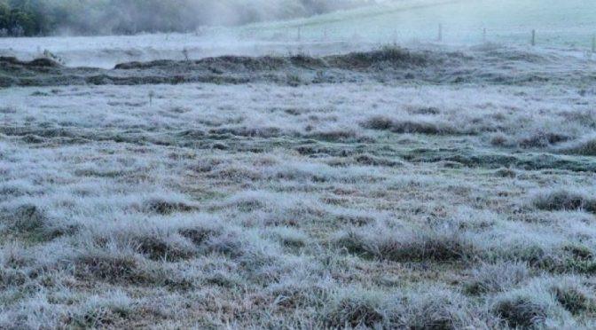 A geada é um fenômeno da natureza que ocorre quando se formam camadas finas de gelo sobre as plantas ou outras superfícies lisas