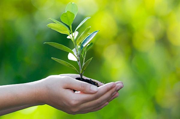Os eventos têm como objetivo fortalecer a conscientização sobre os cuidados com o meio ambiente e a importância da arborização urbana em Campo Grande.