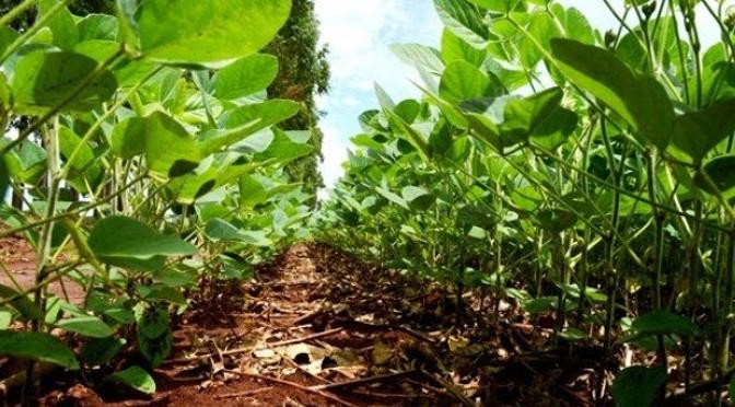 A ação é pré-requisito para a implementação das medidas de Defesa Sanitária Vegetal em Mato Grosso do Sul