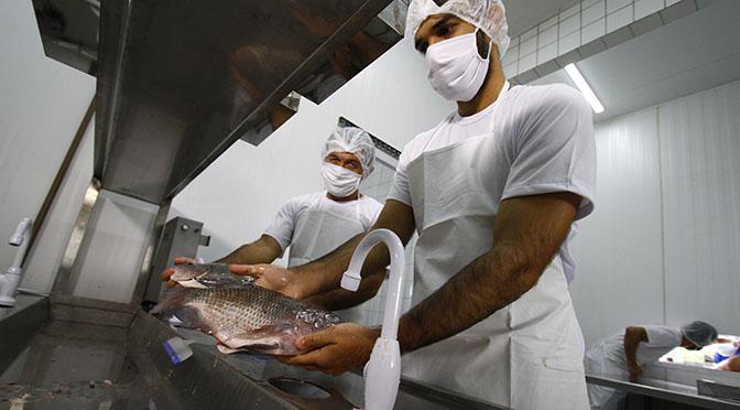 O novo frigorífico de peixes, inaugurado na última sexta-feira (26), no município de Dois Irmãos do Buriti, terá capacidade instalada para abater 18 toneladas/dia de peixes, com 20 empregos diretos