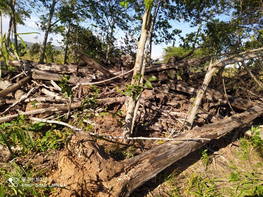 Um comerciante, 63, foi multado em R$ 37,5 mil pela Polícia Militar Ambiental  por desmatamento ilegal em um fazenda em Bela Vista, 326 km de Campo Grande