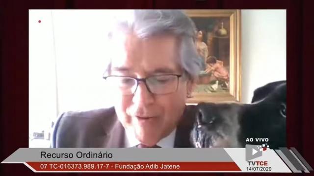 O cachorro Bravo 'invadiu' a sessão do TCE-SP para lamber o tutor