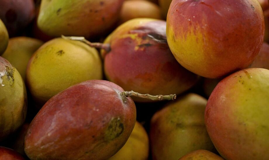 O projeto conjunto teve início em 2011, já tendo lançado sistemas orgânicos para abacaxi e maracujá.