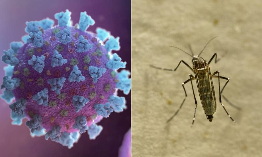 Coronavírus x Dengue