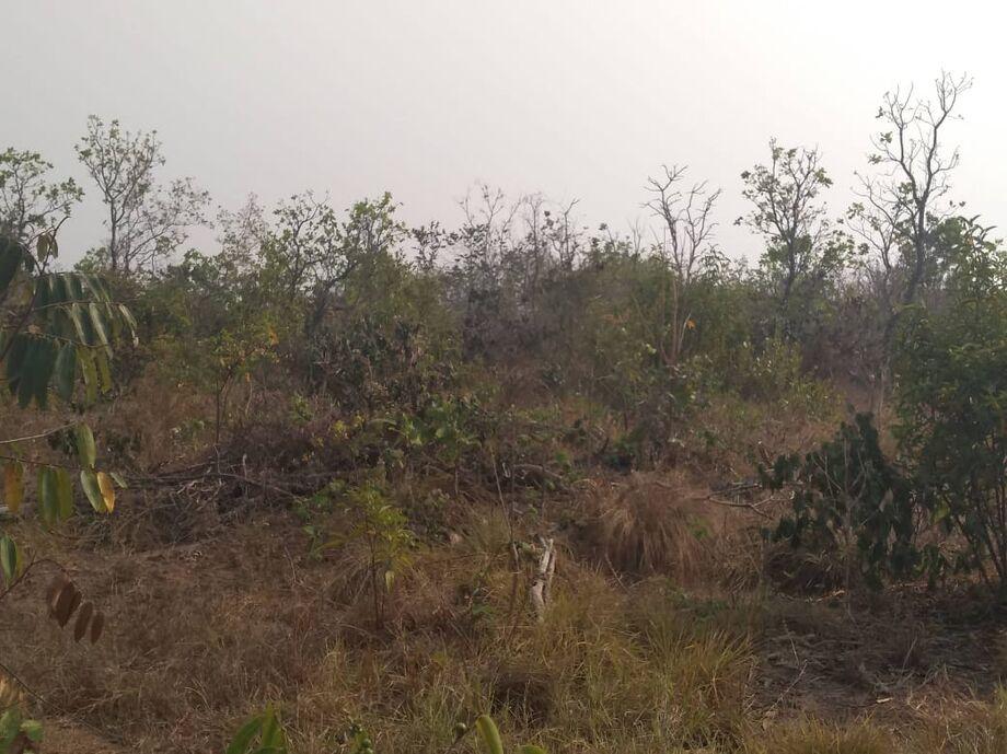 A vegetação nativa havia sido retirada para criação de gado e foram verificadas com ajuda de imagens de satélite.