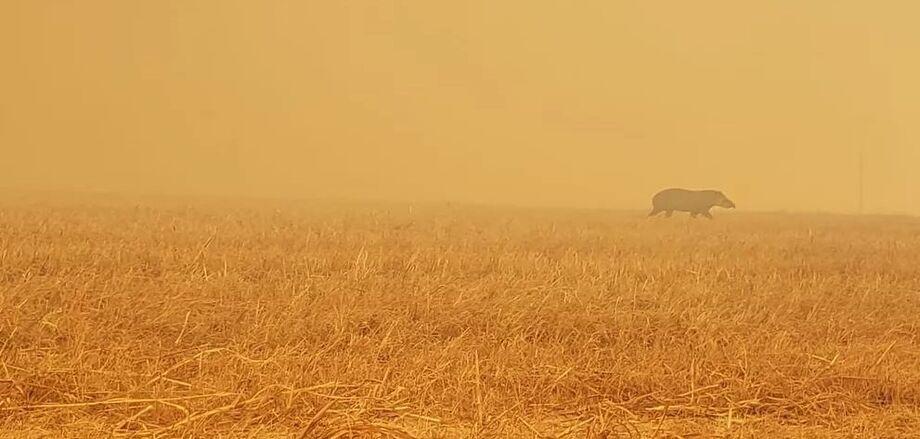 Os incêndios florestais em várias direções e em proporções nunca registradas consomem milhares de hectares nas regiões de Corumbá, Miranda e Aquidauana, devido à estiagem e atos criminosos