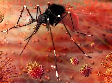 A infecção por Zika Vírus na maioria dos casos é uma doença branda e tem cura espontânea depois de 10 dias.