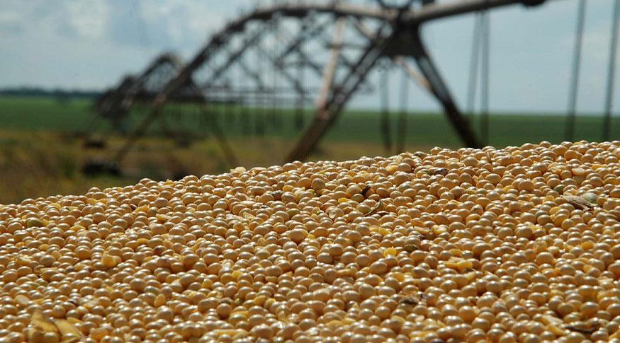 Volume de soja vendido ao exterior causa falta no mercado interno